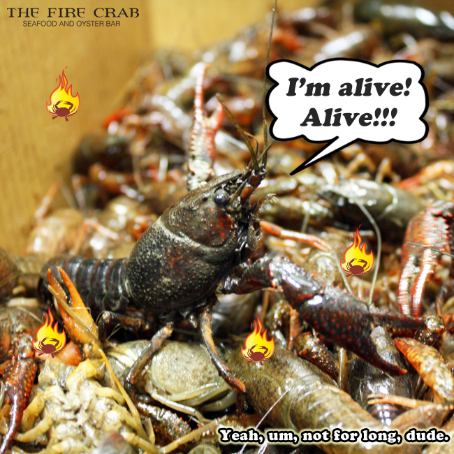 Yeah, We Still Have Live Crawfish! | The Fire Crab